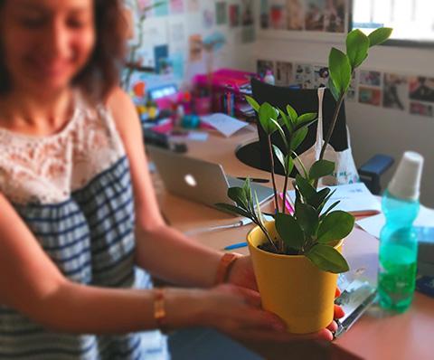 Vous aussi vos plantes IRIS Interactive s'épanouissent sur votre bureau ?